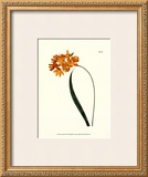 Fiery Florals IV Prints by Samuel Curtis