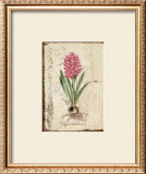 Pink Hyacinth Posters by Lisa Canney Chesaux