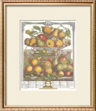 Twelve Months of Fruits, 1732, March Posters by Robert Furber