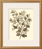 Sepia Munting Foliage I Posters by Abraham Munting