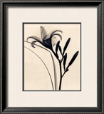 Daylily Prints by Judith Mcmillan