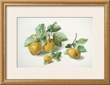 Quinces Prints by Carlos Von Riefel