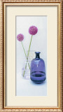 Allium II Prints by Bill Philip