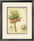 Crown Imperial Lily Prints by Meg Page