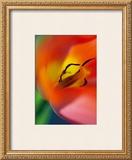 Tulipe V Print by Marc Ayrault