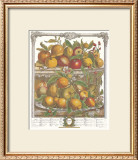 Twelve Months of Fruits, 1732, April Art by Robert Furber