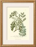 Leaves I Posters by Johann Wilhelm Weinmann