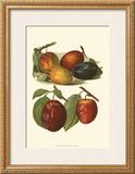 Plum Varieties I Print by John Wright