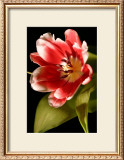 Red Tulip I Posters by Renee Stramel