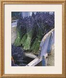 Lavender Harvest Posters by Gunter Rossenbach
