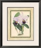Fitch Orchid IV Art by J. Nugent Fitch