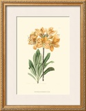 Golden Beauty II Prints by Sydenham Teast Edwards