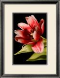 Red Tulip III Prints by Renee Stramel