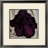 Purple Petunia, 1925 Print by Georgia O&#39;Keeffe
