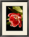 Red Tulip IV Poster by Renee Stramel
