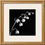Spring Bells II Prints by Michael Faragher