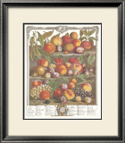 Twelve Months of Fruits, 1732, August Prints by Robert Furber