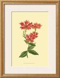 Le Fleur Rouge III Posters by Sydenham Teast Edwards
