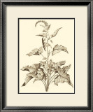 Sepia Munting Foliage II Posters by Abraham Munting