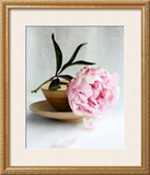 Peony Prints by Amelie Vuillon