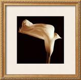 Lily Prints by Michael Harrison
