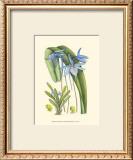 Periwinkle Blooms IV Art by Samuel Curtis