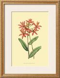 Le Fleur Rouge IV Prints by Sydenham Teast Edwards