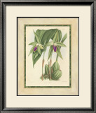 Fitch Orchid VI Prints by J. Nugent Fitch