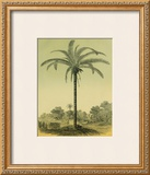 Astrocaryum Palm Framed Giclee Print by Ch. Lemaire
