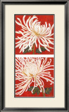 Spider Mum Petites Posters by Judy Shelby
