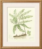 Eaton Ferns II Posters by Daniel C. Eaton