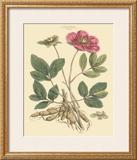 Blushing Pink Florals I Poster by  John Miller (Johann Sebastien Mueller)
