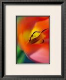 Tulipe V Prints by Marc Ayrault