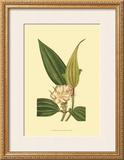 Tropical Ambrosia I Print by Sydenham Teast Edwards