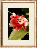 Red Tulip II Art by Renee Stramel