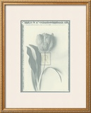 Tulip Impression I Prints by Bill Philip