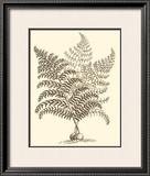 Sepia Munting Foliage VI Art by Abraham Munting