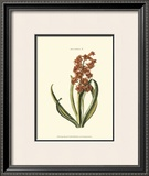Antique Hyacinth V Prints by Christoph Jacob Trew