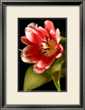 Red Tulip I Art by Renee Stramel