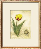 Keizerskroon Tulip Prints by Meg Page