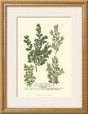 Leaves II Prints by Johann Wilhelm Weinmann