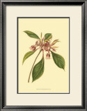 Tropical Ambrosia III Prints by Sydenham Teast Edwards