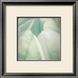 Tulip Trio II Prints by Gabriel Scott