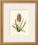 Antique Hyacinth XVI Art by Christoph Jacob Trew