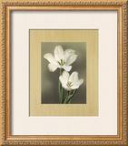Tulipani Poster by Andrea Trivelli