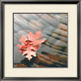 Leaves in Stream Posters by Glen & Gayle Wans
