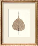 India Ficus Art by Alan Blaustein
