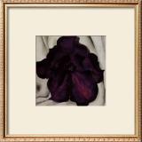 Purple Petunia, 1925 Prints by Georgia O'Keeffe