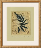 Fern Garden Posters by Betsy Bauer