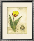 Keizerskroon Tulip Print by Meg Page